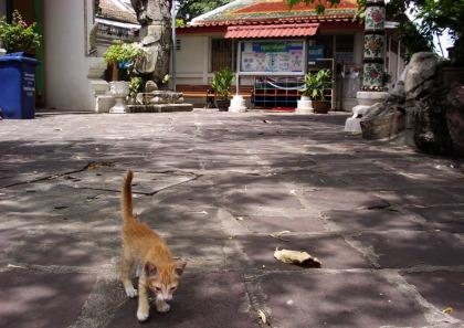タイの子猫
