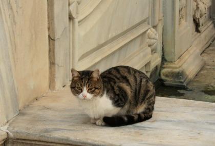 ドルマバフチェ宮殿のネコ