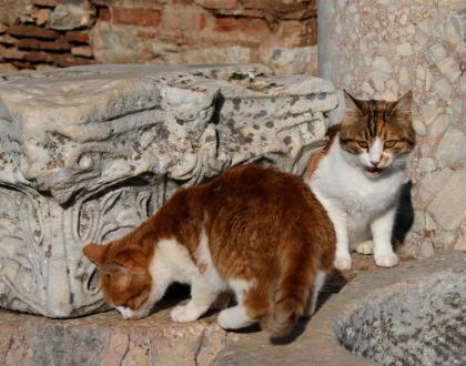 遺跡とネコ