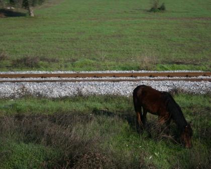 線路とウマ