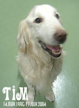 LOVE TIM