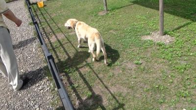 アジア食用形犬