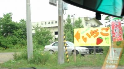 北海道島松いちご