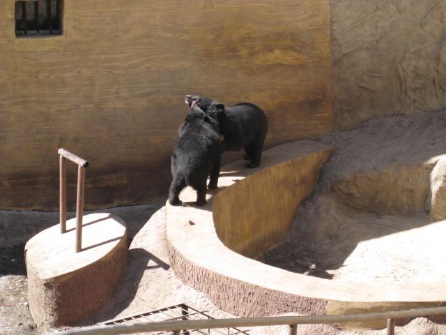 万里の長城熊1