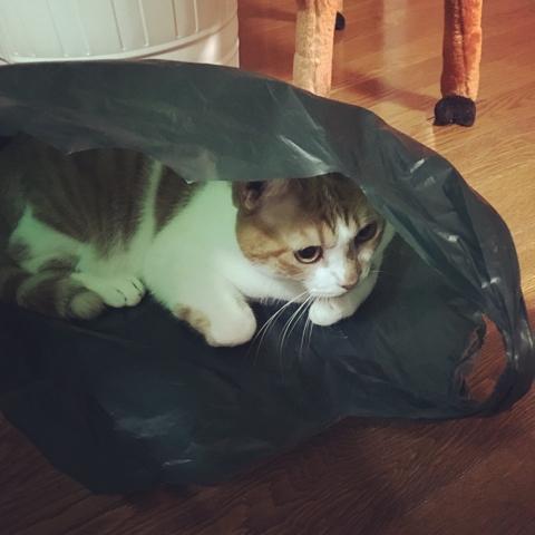 猫 ビニール袋