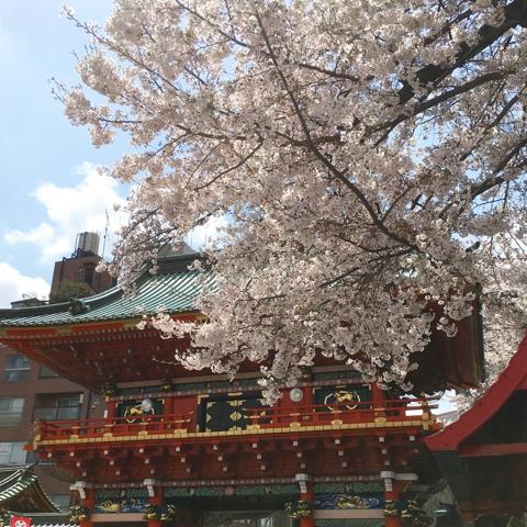 神田明神 桜