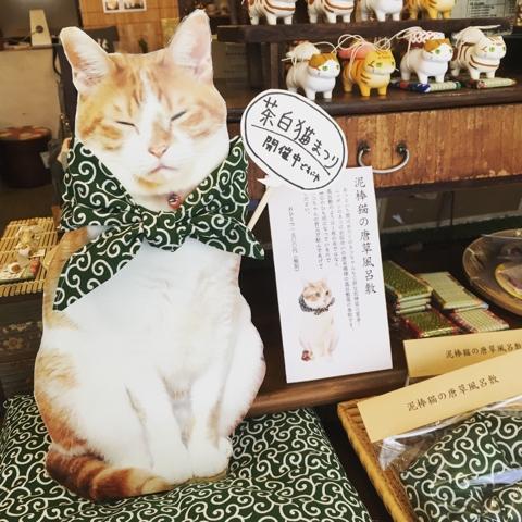 茶白猫 まつり