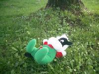 木陰 芝生