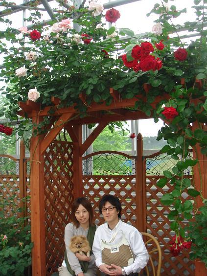 薔薇アーチ