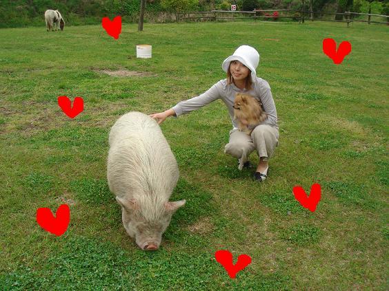 豚ちゃんと