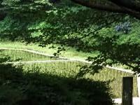 駒場野公園2