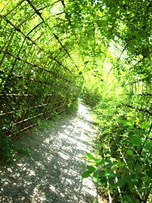 向島百花園の萩のトンネル(01)