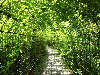 向島百花園の萩のトンネル(02)