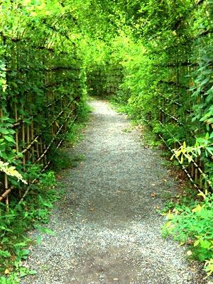 向島百花園の萩のトンネル(03)
