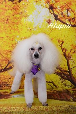 alupin41.JPG