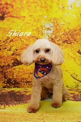 shiara26.JPG