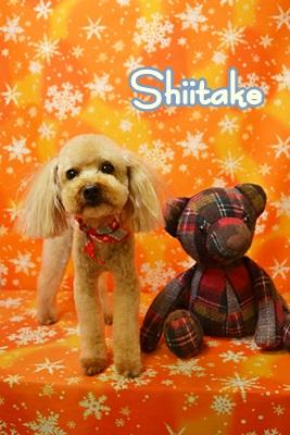shiitake.JPG