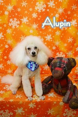 alupin2.JPG