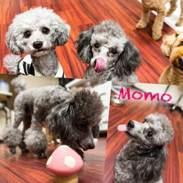momoa.jpg