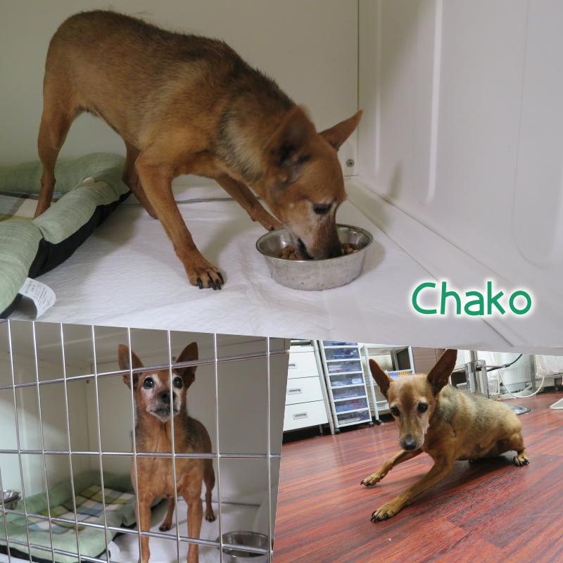 chako.png