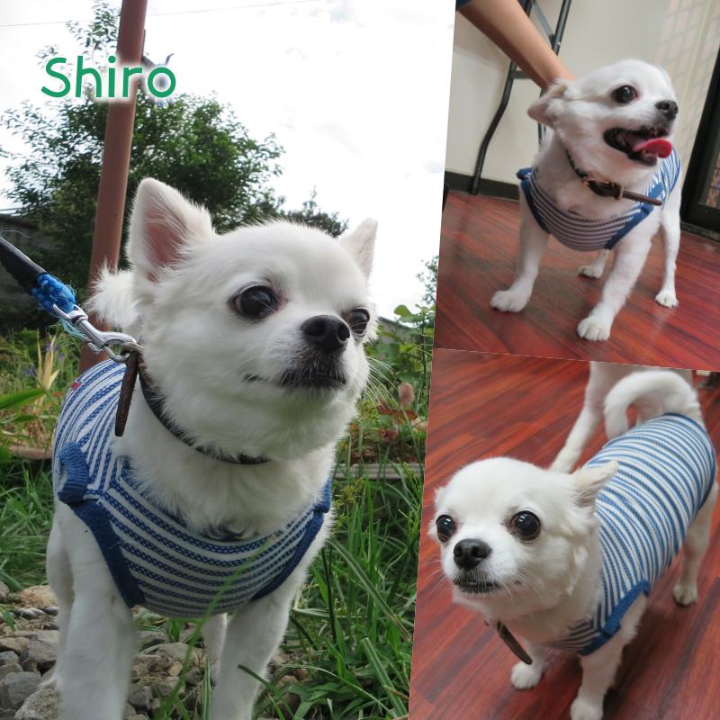 shiro.png