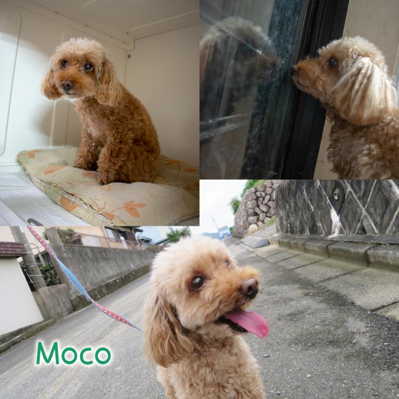 moco.png