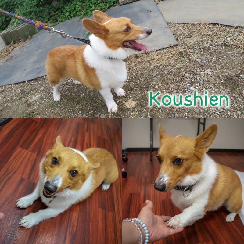 koushi.png