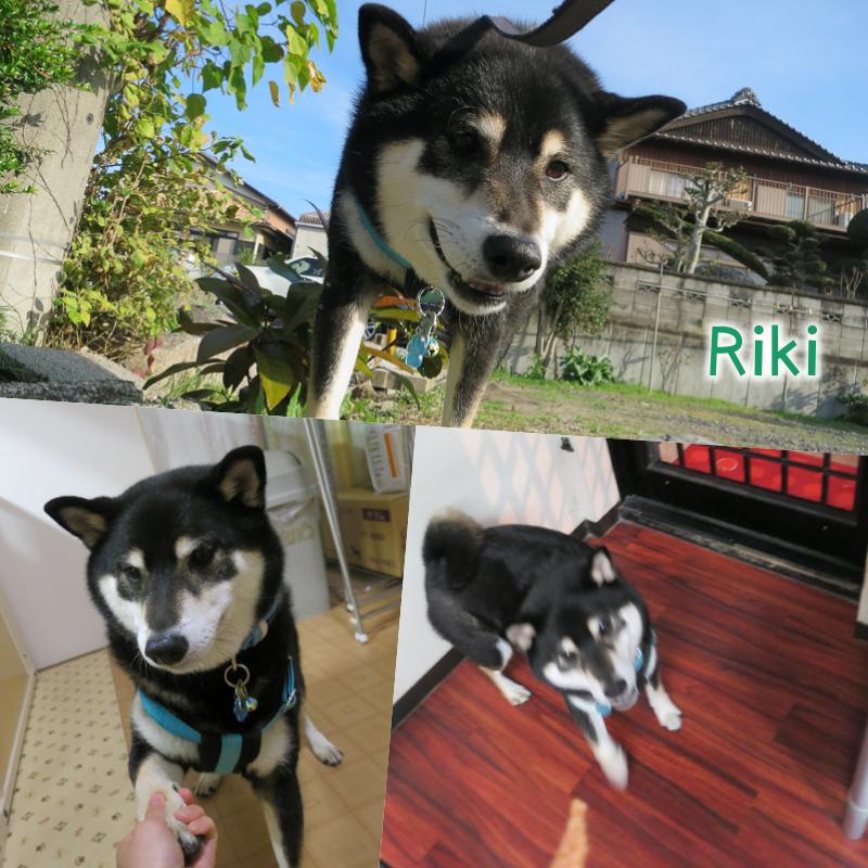 riki.png