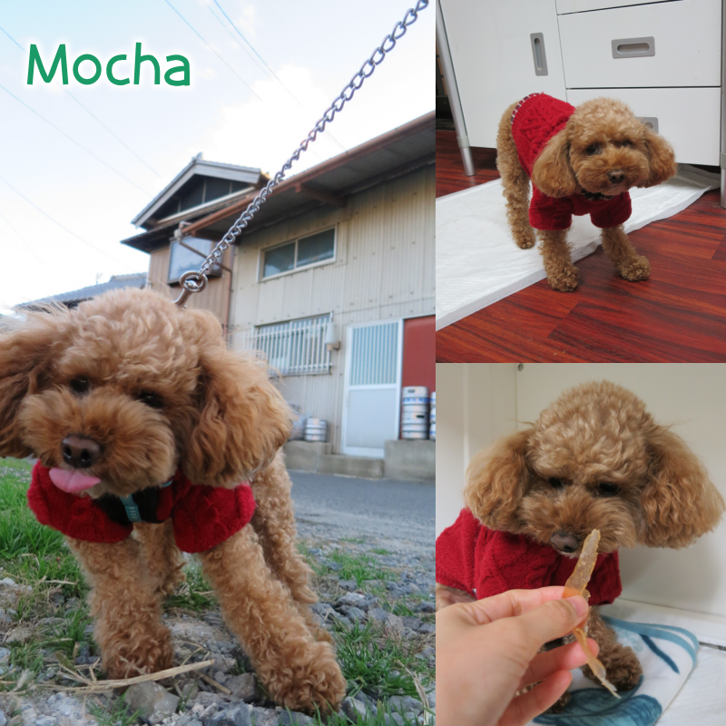 mocha.png