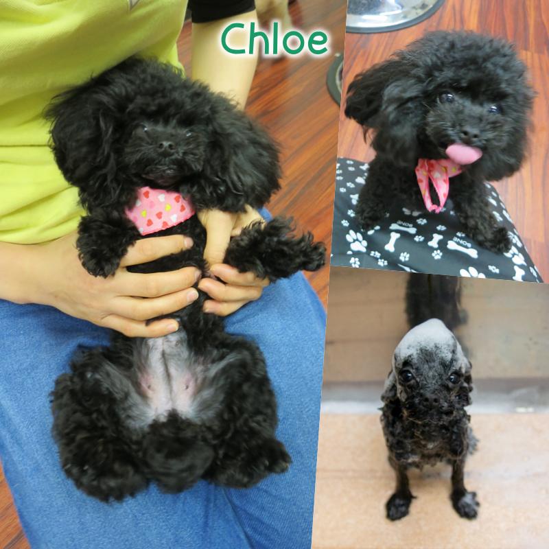Chloe.png