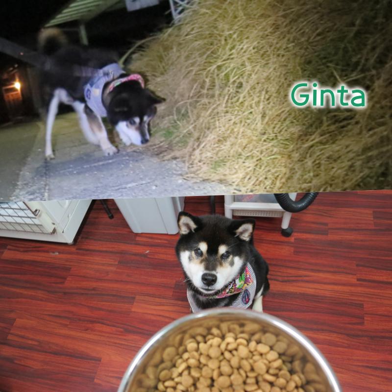 Ginta.png