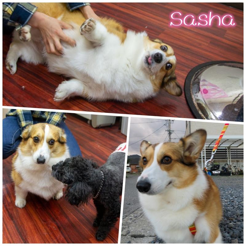 sasha.jpg