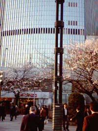 東京・有楽町の桜