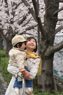 2度目の桜♪