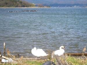 大きな加茂湖