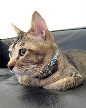 猫の首輪 新作