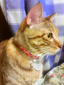 猫の首輪 お客様の声