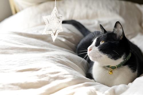 猫首輪 クリスマス