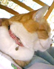 猫の首輪 和柄