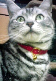 猫の首輪 クリスマス