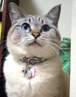 猫の首輪 お客さまの声