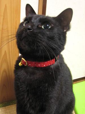 猫の首輪 赤い首輪