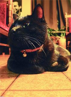 猫の首輪 唐草