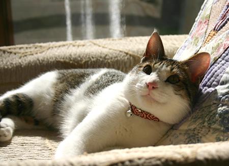 猫の首輪 唐草模様