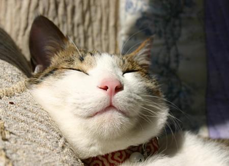 猫 首輪 唐草模様