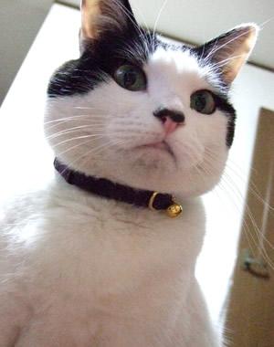 猫の首輪 クチコミ
