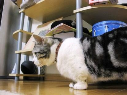 猫 首輪 クチコミ