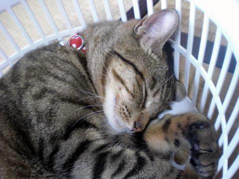 猫 首輪 CONOHA