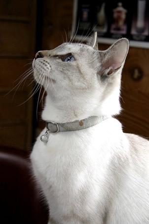 猫 首輪 和風 和柄