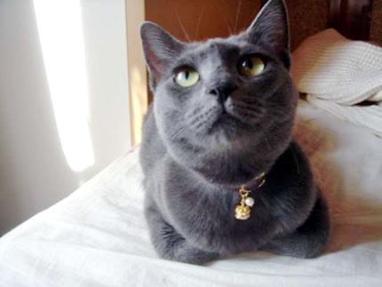 猫 首輪 口コミ